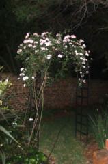 garden trelli